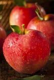 Surowi Organicznie Czerwoni Galowi jabłka Obrazy Stock