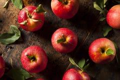 Surowi Organicznie Czerwoni Galowi jabłka Zdjęcie Royalty Free