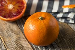 Surowi Organicznie Rubinowi tango Krwionośnej pomarańcze Clementines zdjęcie stock
