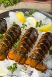 Surowi Organicznie Świezi homarów ogony Zdjęcie Stock