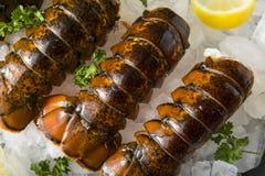 Surowi Organicznie Świezi homarów ogony Obrazy Royalty Free