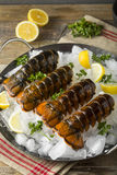 Surowi Organicznie Świezi homarów ogony Zdjęcie Royalty Free