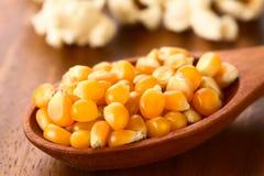 Surowi popkornów nasiona Fotografia Stock