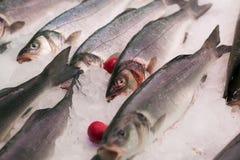 Surowy śródziemnomorski seabass Obrazy Royalty Free
