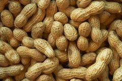 Surowy arachidu tło Wiele arachidy w skorupach fotografia stock