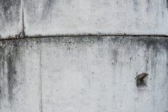 Surowy betonowa tekstura Obrazy Stock