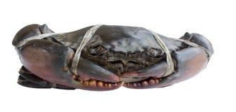 Surowy czarny krab Zdjęcie Royalty Free
