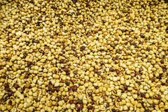 surowy fasoli cacao Obraz Stock
