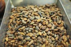 surowy fasoli kakao Zdjęcie Stock