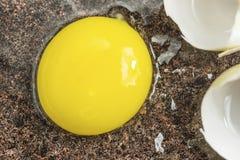 Surowy jajecznego yolk zakończenie up fotografia royalty free