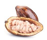 Surowy kakaowy strąk i fasole odizolowywający na bielu obraz stock