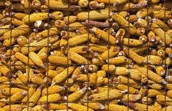 surowy kukurydzany stajnia format Obraz Stock