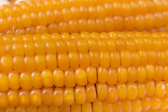 Surowy kukurydzany zbliżenie Obraz Royalty Free