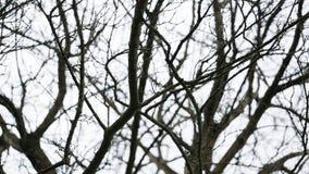 Surowy nagi czerń rozgałęzia się w zimie przeciw białemu chmurzącemu niebu obrazy royalty free