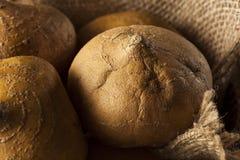 Surowy Organicznie Brown Jicama Fotografia Stock