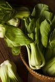 Surowy Organicznie dziecko Bok Choy Fotografia Stock