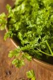 Surowy Organicznie Francuski pietruszka świerząbek Fotografia Royalty Free