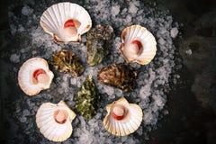 Surowy owoce morza: przegrzebki, langoustines, garnele i ostrygi, zdjęcie stock