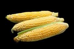 Surowy słodkiej kukurudzy szczegół Zdjęcie Stock