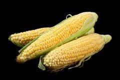 Surowy słodkiej kukurudzy szczegół Fotografia Stock