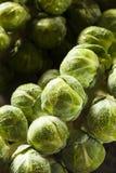 Surowy Zielony Organicznie Brussel - flance Zdjęcia Stock
