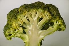 Surowych brokułów kształtny drzewo Zdjęcie Stock