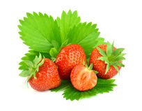 Surowych jagod czerwona truskawka, odizolowywająca Fotografia Royalty Free