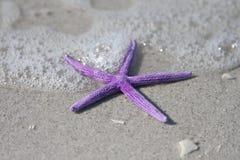 Surple Starfish and Sea. Purple starfish from the ocean on sandy beach stock photo