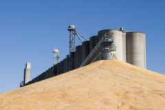 Surplus Corn elevator. Corn harvest elevator conveyor pile stock photos