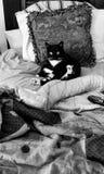 Surpresa da manhã do gato do smoking Foto de Stock