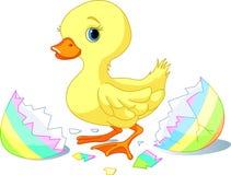 Surpresa de Easter Fotografia de Stock
