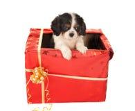 Surpresa do filhote de cachorro para o Natal Foto de Stock