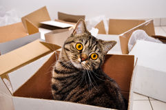 Cat in box. Surprise Royalty Free Stock Photo