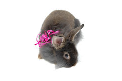 Surprise bunny Royalty Free Stock Photography