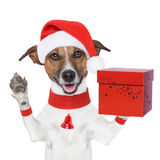 Surprise christmas dog with a present box Stock Image