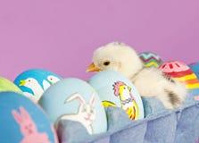 Surprise dans un carton d'oeufs Images stock