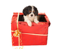 Surprise de chiot pour Noël Photo stock