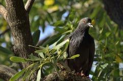 Surprise de pigeon Image libre de droits