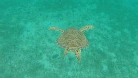 Surprise de tortue de mer Photo libre de droits