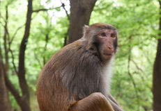 Surprise monkey. Portrait in mountain Stock Image