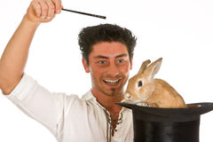 Surprise rabbit royalty free stock images