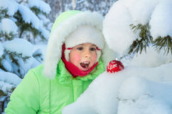 Surprise in the winter forest. Royalty Free Stock Image