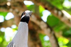 Surprised Bird Stock Photos