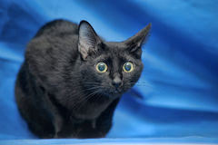 Surprised black cat Stock Images