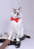 Surprised blue-eyed cat with red bow tie and the electric guitar. Blue-eyed cat with red bow tie and the black and white electric guitar Stock Photo