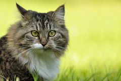 Surprised cat Stock Images