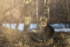 Surprised cat in forest Royalty Free Stock Image