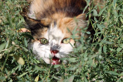 Surprised cat in the grass Royalty Free Stock Photography