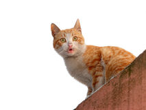 Surprised cat looking at camera Royalty Free Stock Photography