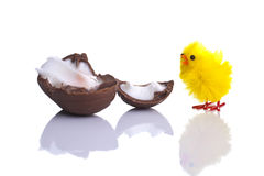 Surprised Chick with a broken cream egg Stock Photography